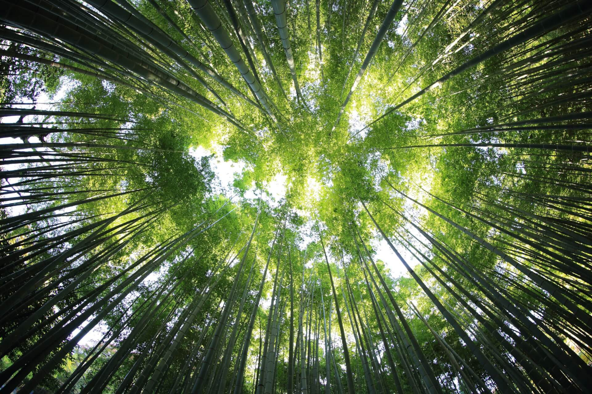 Disputes risks for FS firms: 'greenwashing' and ESG reporting obligations